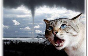 Есть ли у кошек шестое чувство?