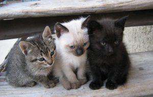 Какого выбрать котенка?