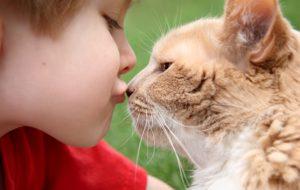 Кошка в доме — польза или вред?