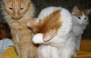Беспородные кошки