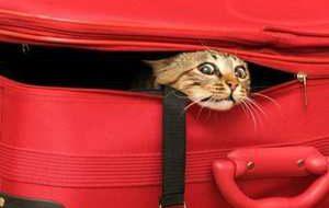 Что нужно знать, отправляясь в путешествие с кошкой?