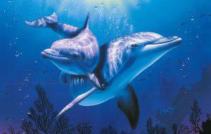 Невероятные факты о дельфинах и их способностях