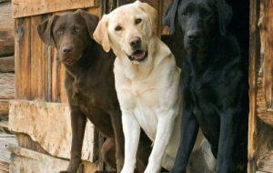 Самая дорогая собака в мире. Какие популярные породы собак