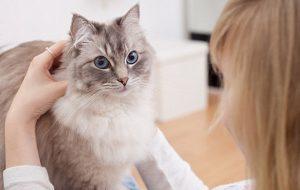 Выраженные симптомы ПМС могут быть связаны с наличием дома кошки