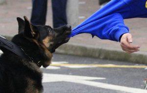 Что делать, чтобы защитить себя от агрессивной собаки?