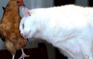 Может ли кошка заразить человека гриппом?
