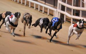 Самая быстрая собака: топ 10 пород