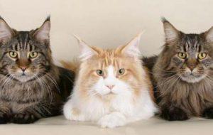 Что означает, если кошка топчет тебя передними лапами?