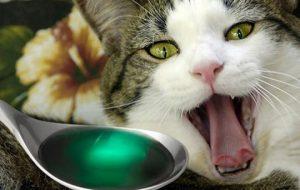 Отравление у кошек: чем лечить?