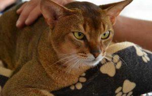 Ученые насчитали у кошек пять типов характеров