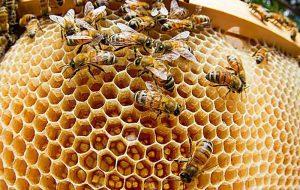 Какие вещества выделяют насекомые?