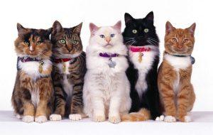 Выбор породы кошки