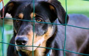 Как открыть приют для собак и кошек?