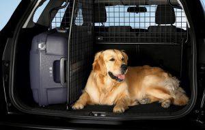 Перевозка домашних питомцев в машине