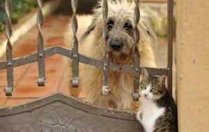 Может ли дружить кошка с собакой?