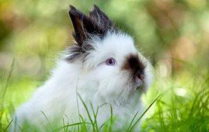 Вакцинация кроликов: все, что нужно знать хозяину