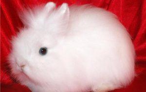 Карликовые кролики. Симпатичные породы