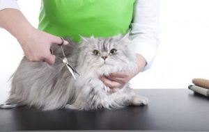 Нужен ли кошке парикмахер?