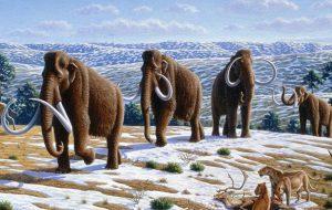 Ученые назвали причину вымирания на Земле мамонтов