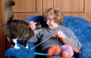 Почему кошек считают домашними докторами