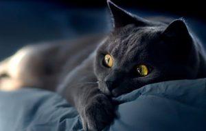 Почему кошки уходят умирать?