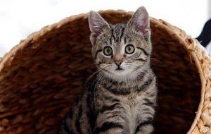 Развитие котят по неделям и месяцам в первые 6 месяцев