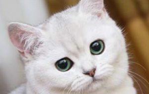 Кошки, даже, восстанавливают нервные клетки человека