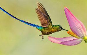Интересные факты о колибри