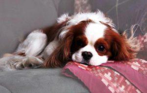 Породы собак с хорошим характером и поведением