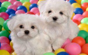 Самые дружелюбные породы собак для детей