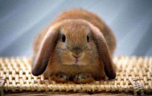 Чего хочет кролик?