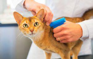 Чипирование, оформление свидетельства, занесение в базу домашних животных