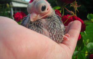 Редкие и необычные птицы