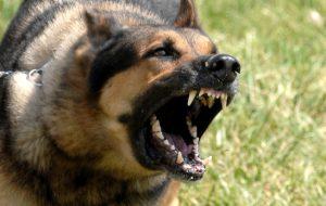 Бешенство у собак — симптомы, которые должен знать каждый