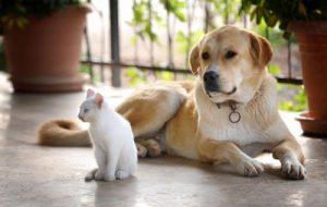 Одомашнивание кошек и собак