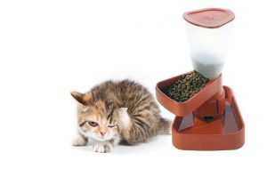 Автоматическая кормушка для кошки
