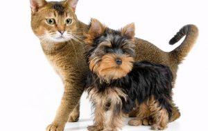 Карлики в мире собак