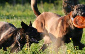 Собаки могут лечить болезни людей