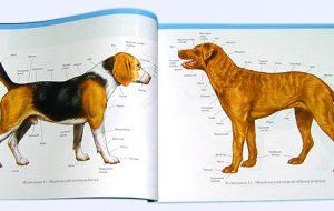 Стоматологическая анатомия собак