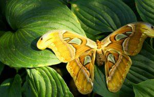 Радужные крылья: какие бабочки самые красивые?