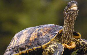 Как ухаживать и чем кормить сухопутную черепаху в домашних условиях — выбор террариума и рациона питания