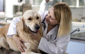 Когда можно стерилизовать собаку — как проходит процедура, послеоперационный уход и стоимость операции