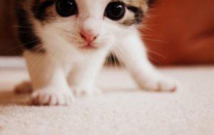 Как кошки лечат болезни