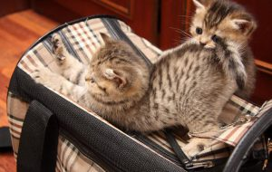Выбираем сумки-переноски для кошек