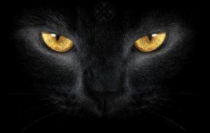 Чёрная кошка. Быть добру