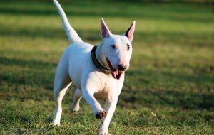 Самые некрасивые породы собак