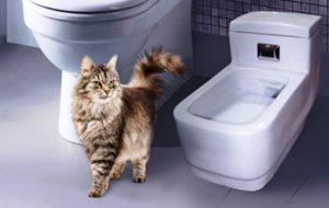Биотуалет для кошек — как сделать правильный выбор?