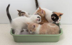 Японец создает шляпы для котов из их же шерсти