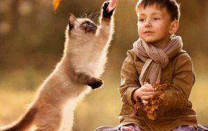 Ребенок и кошка в доме