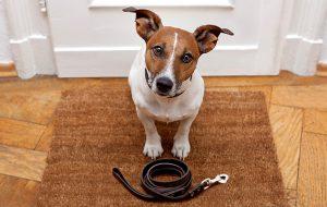 Гуляем! Правила безопасности для собак на прогулке